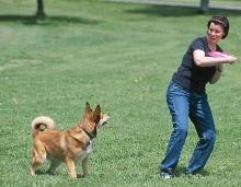 Sport, Spiel und Arbeit mit Hunden
