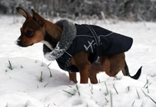 hund-im-winter