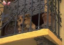Hunde eingewöhnen