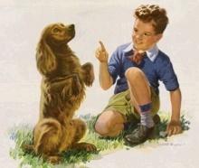 Hundeerziehung - Hunde erziehen