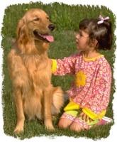 Hunde artgerecht halten