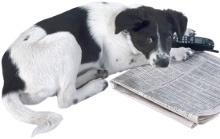 Hundehaltung.org News