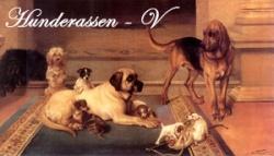 Hunderassen-Portraits: