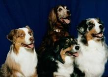 Verschiedene Hunderassen aus aller Welt